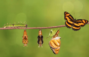 How-To-Change-The-Subconscious-Mind-Butterfly