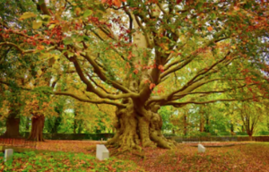 Your-Ego-Viewed-From-A-Psychological-And-Spiritual-Perspective-Tree